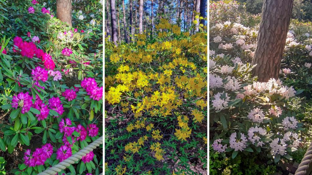 Alppiruusupuisto - rododendronový park v Helsinkách